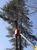 町田市 立木伐採